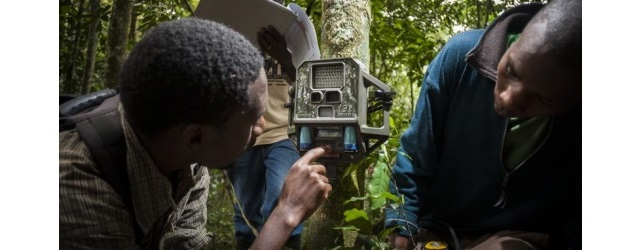 Conservation International workers set up remote digital camera for capturing images of wild animals (CI photo)