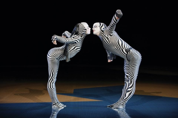 Cirque du Soleil zebra Cirque uses SAP SaaS