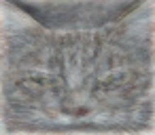 google-brain-experiment-cat