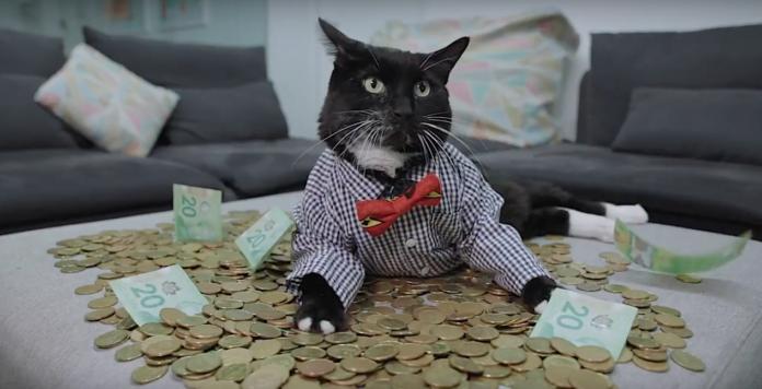 Hardbacon money cat