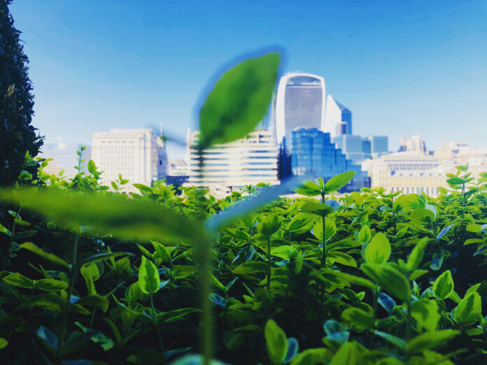 Plants in front of a cityscape to demonstrate a sustainable future.